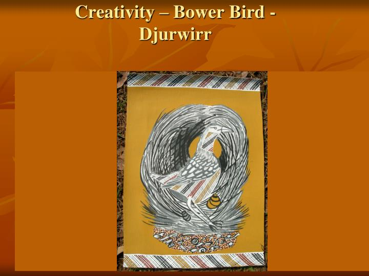 Creativity – Bower Bird - Djurwirr