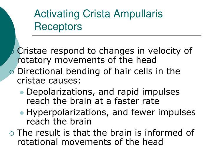 Activating Crista Ampullaris Receptors