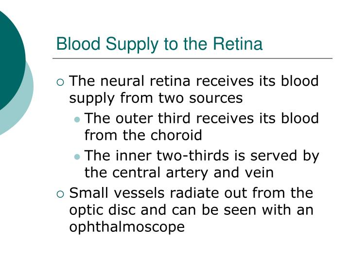 Blood Supply to the Retina