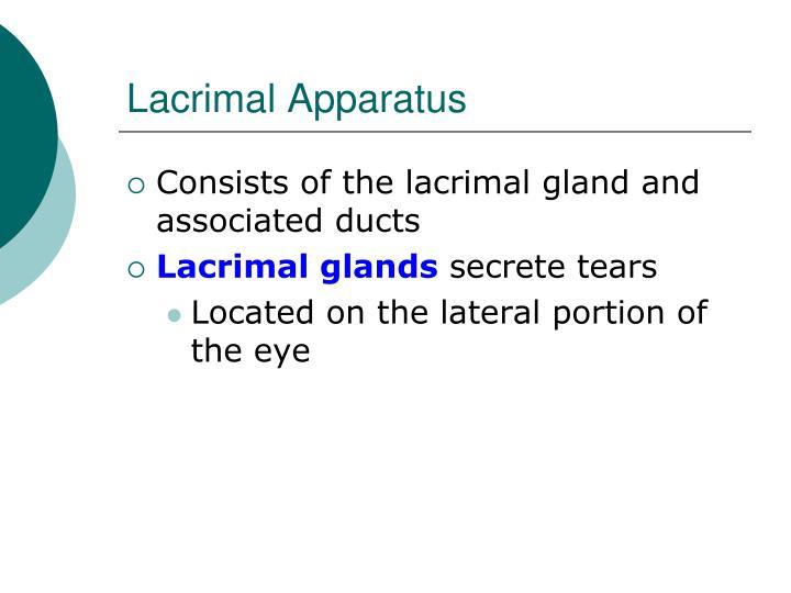 Lacrimal Apparatus