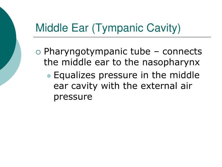Middle Ear (Tympanic Cavity)