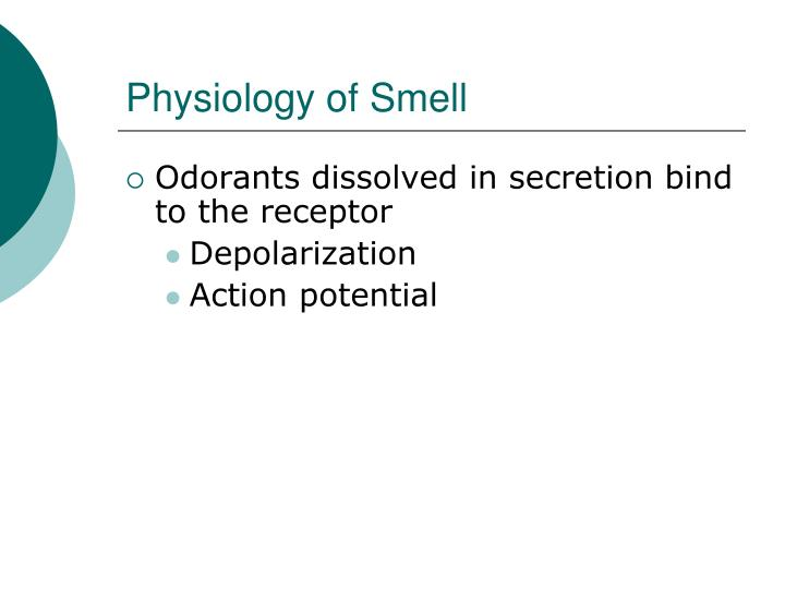 Physiology of Smell