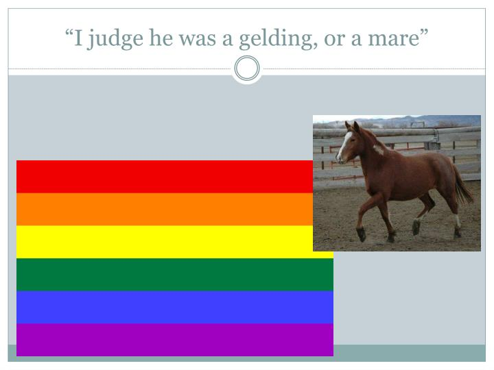 """I judge he was a gelding, or a mare"""