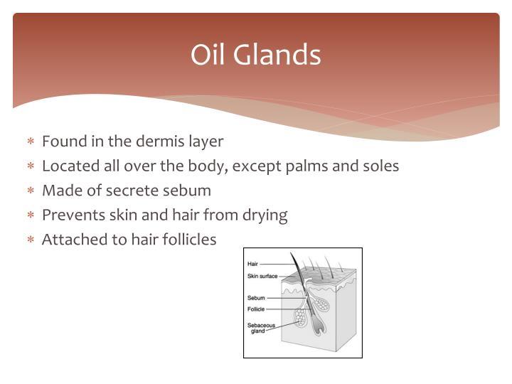 Oil Glands