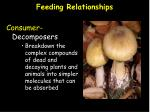 feeding relationships7