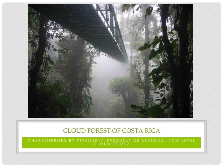 Cloud Forest of costa