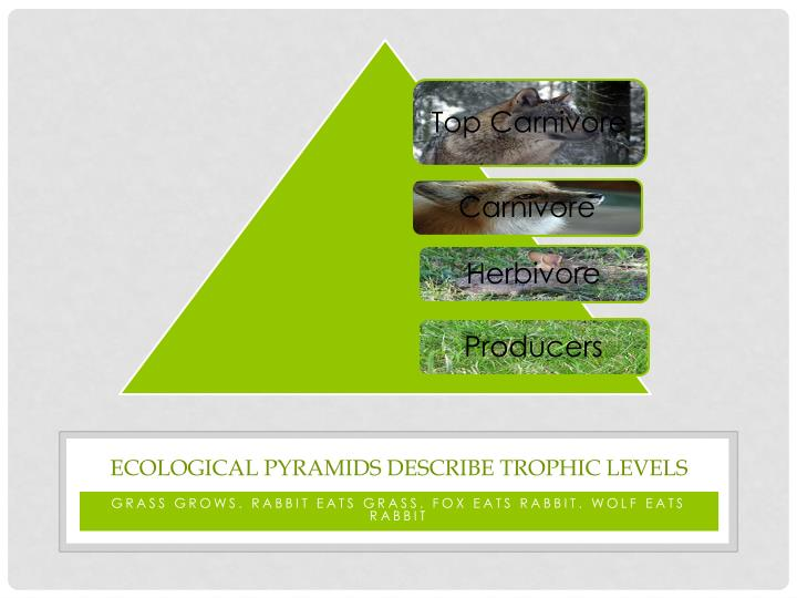 Ecological pyramids describe Trophic Levels