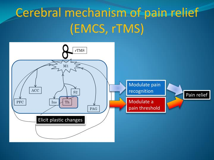 Cerebral mechanism of pain relief