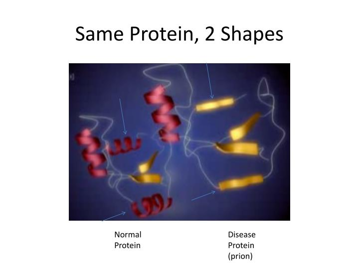 Same Protein, 2 Shapes