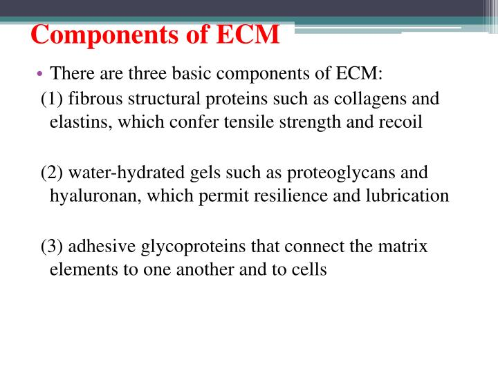 Components of ECM