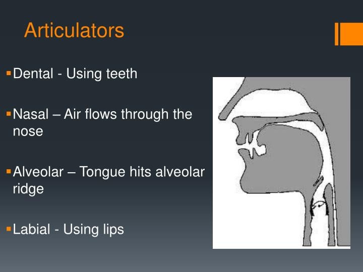Articulators