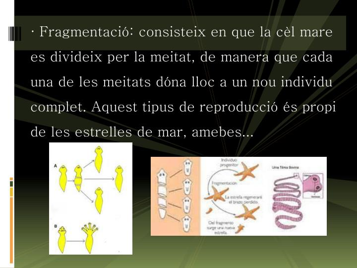 · Fragmentació: consisteix en que la