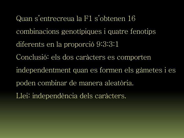 Quan s'entrecreua la F1 s'obtenen 16 combinacions genotípiques i quatre fenotips diferents en la proporció 9:3:3:1
