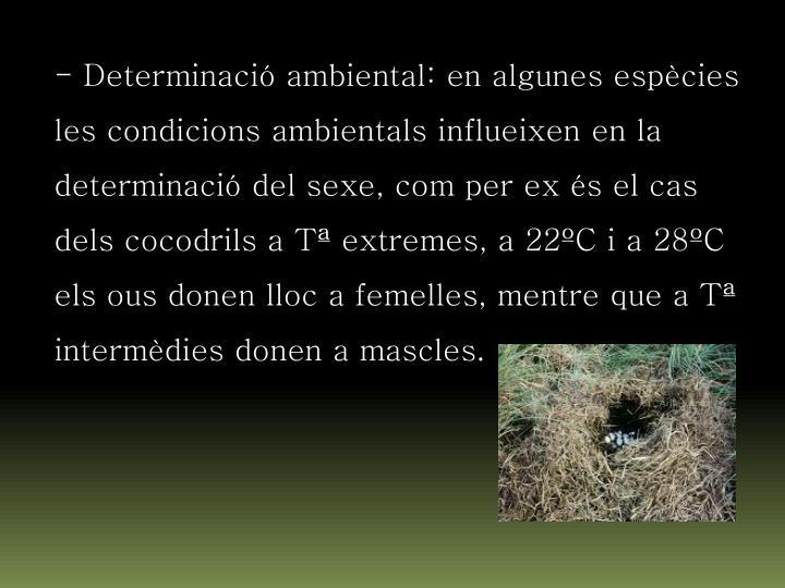 - Determinació ambiental: en algunes espècies les condicions ambientals influeixen en la determinació del sexe, com per ex és el cas dels cocodrils