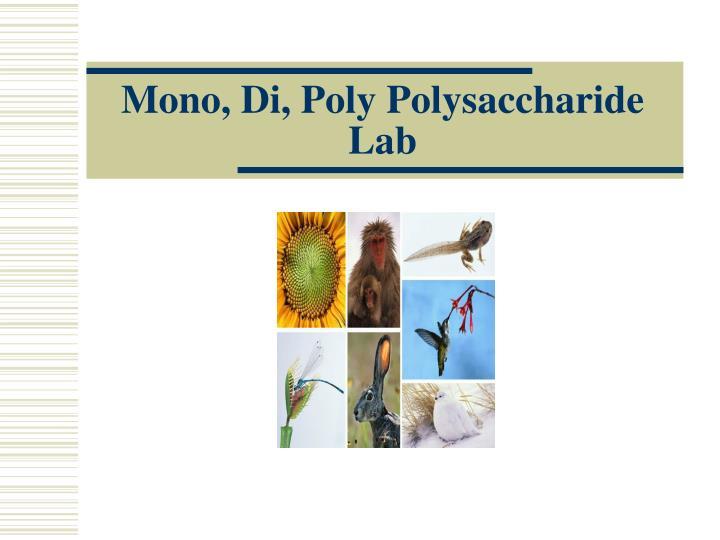 Mono, Di, Poly