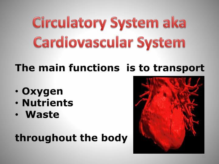 Circulatory System aka