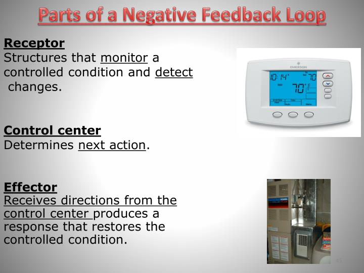 Parts of a Negative Feedback Loop