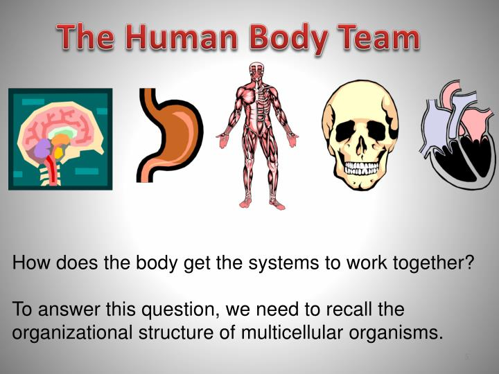 The Human Body Team