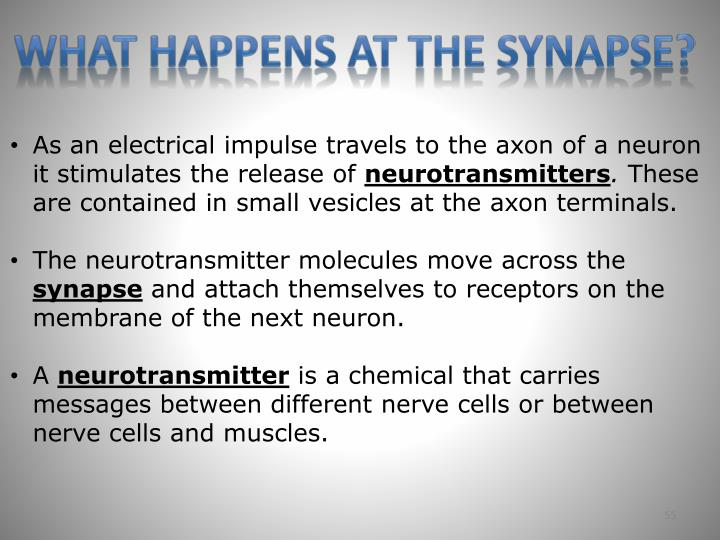 What happens at the synapse?