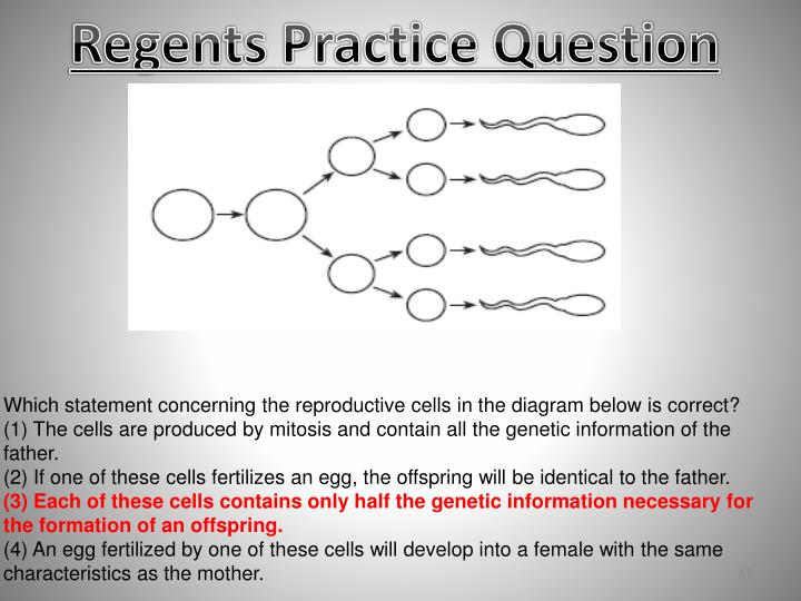 Regents Practice Question