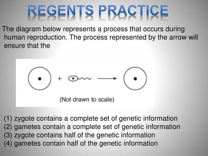 Regents Practice