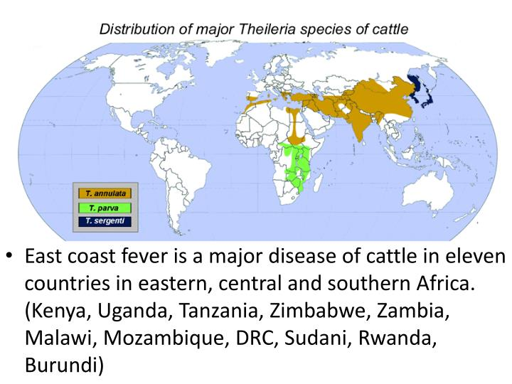 East coast fever is a major disease of cattle in eleven countries in eastern, central and southern Africa. (Kenya, Uganda, Tanzania, Zimbabwe, Zambia, Malawi, Mozambique, DRC,