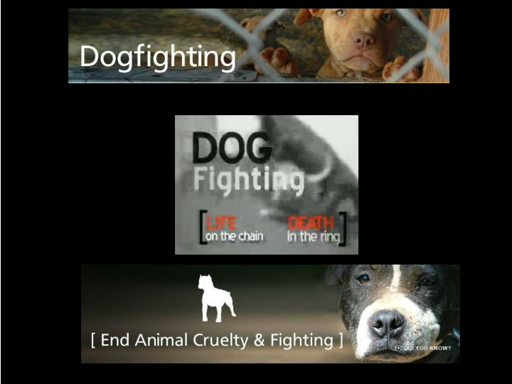 against animal abuse essays There are several good counter arguments for an essay against animal cruelty one argument is that humans must control the animal's behavior another argument is that one must defend himself or.