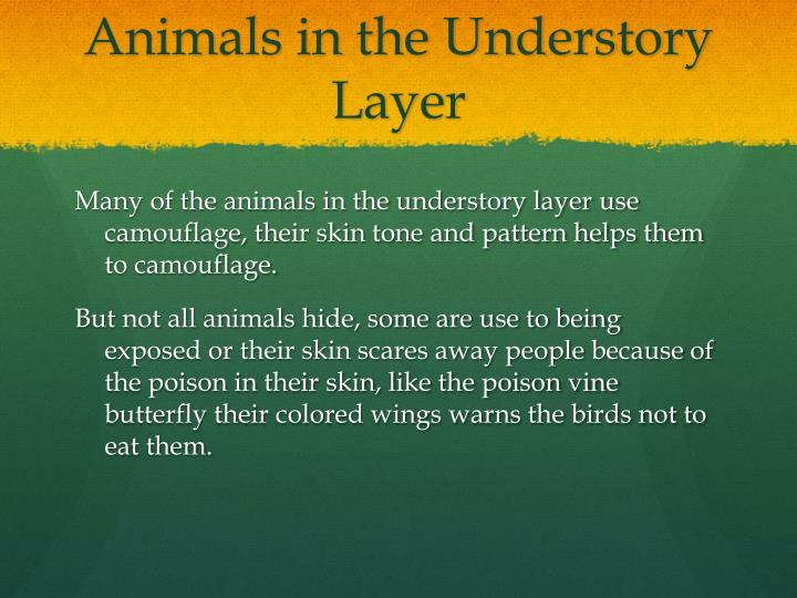 Animals in the Understory Layer