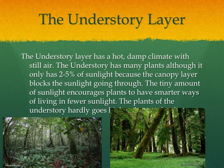 The understory layer