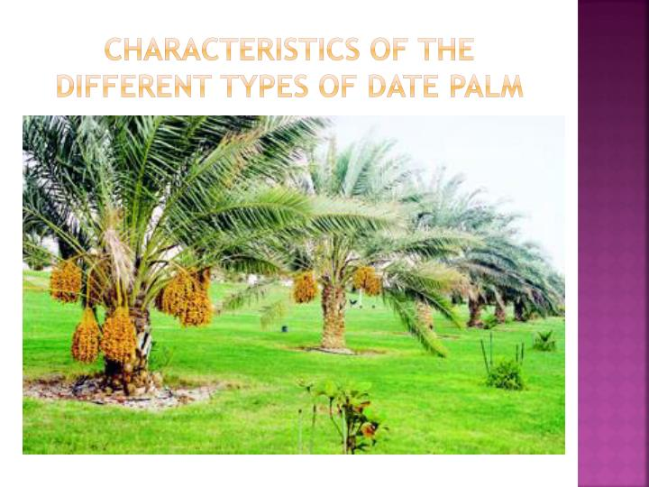 the different characteristics of my date The mental characteristics of an individual can be read through name and the date of birth, to names used in a different language.