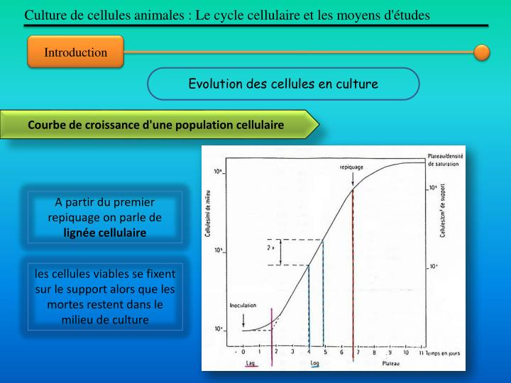 Culture de cellules animales : Le cycle cellulaire et les moyens d'études