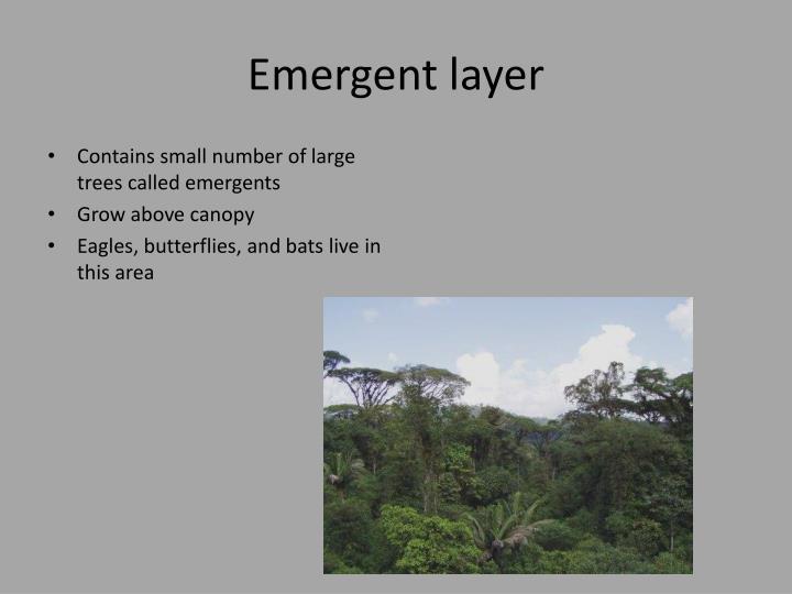 Emergent layer
