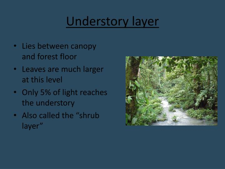 Understory layer