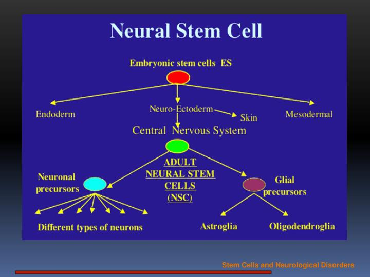 Stem Cells and