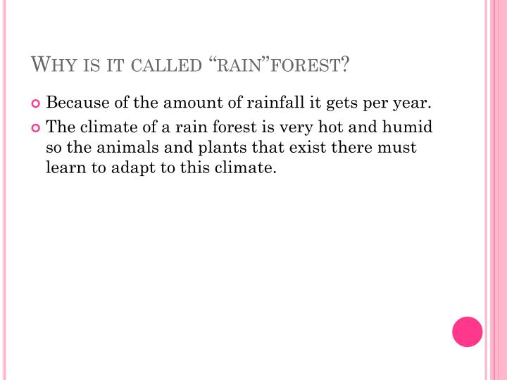 Why is it called rain forest