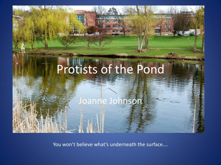 Protists of the pond