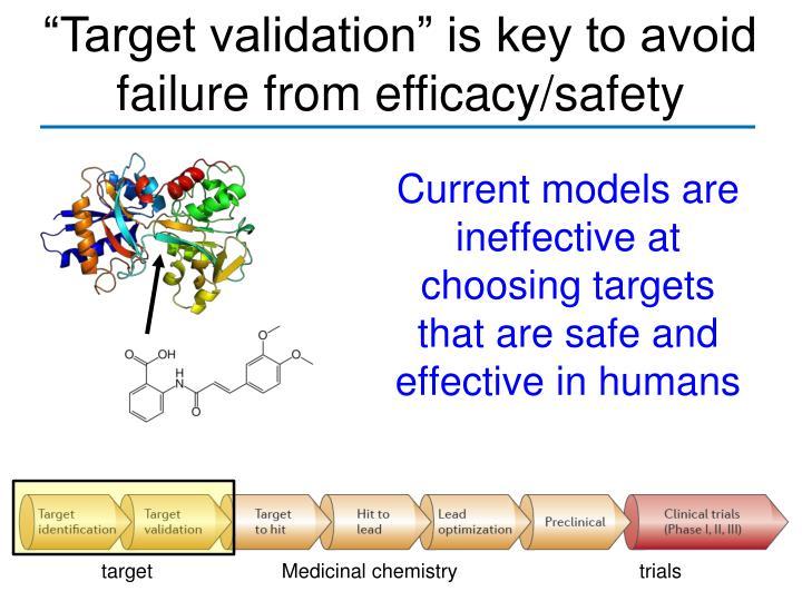 """Target validation"" is key to avoid failure from efficacy/safety"