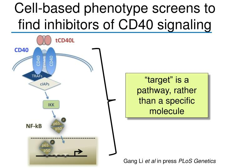 Cell-based phenotype screens to find inhibitors of CD40 signaling