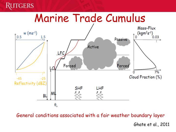 Marine Trade Cumulus