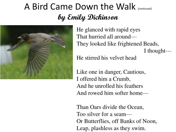 a bird came down the walk 'a bird came down the walk' by emily dickinson in five pages this poem is examined in a consideration of figurative language, imagery, and tone.