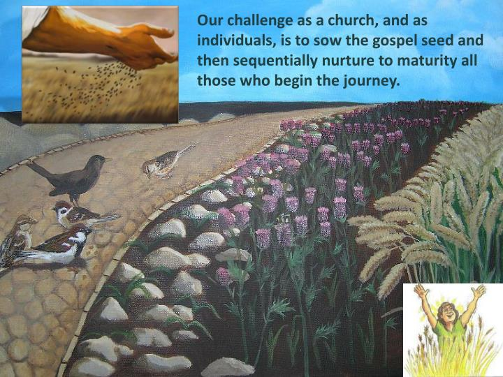 Our challenge as a church, and as individuals, is to sow the gospel seed and then sequentially nurture to maturity all those who begin the journey