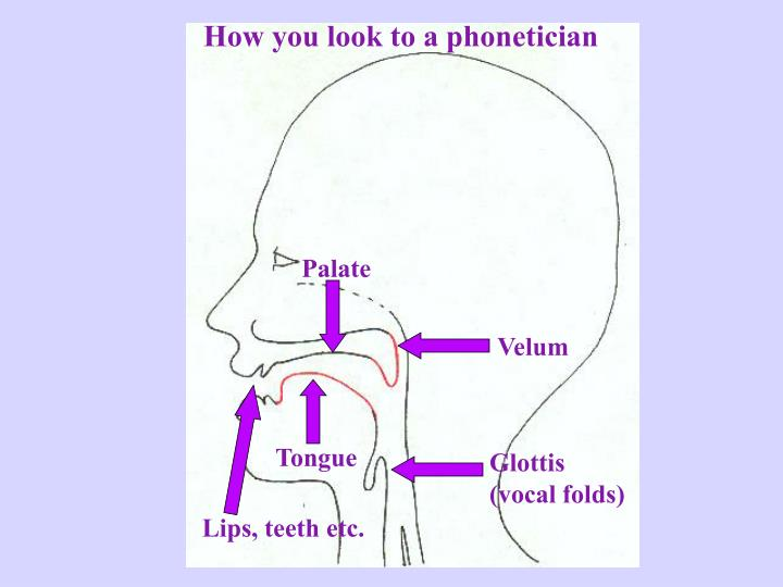 How you look to a phonetician