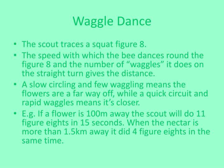 Waggle Dance