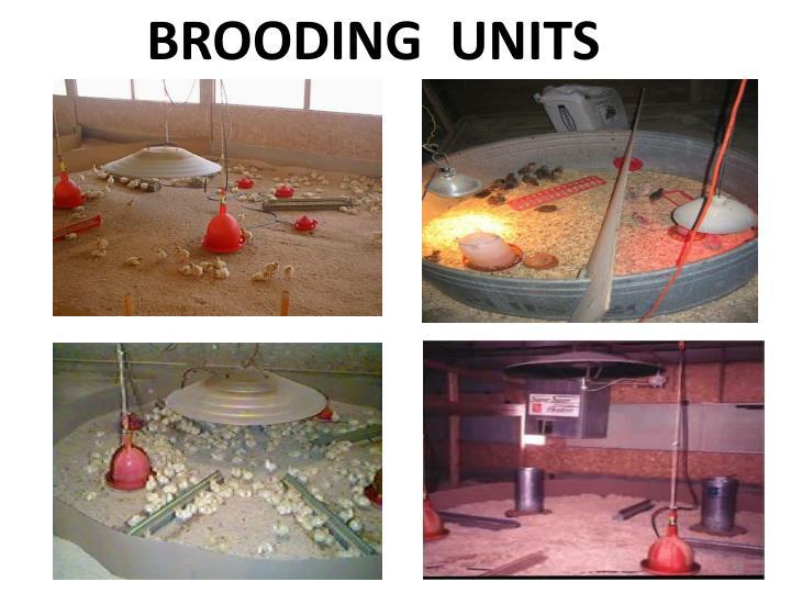 BROODING  UNITS