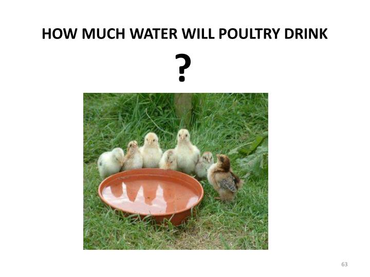 HOW MUCH WATER WILL POULTRY DRINK