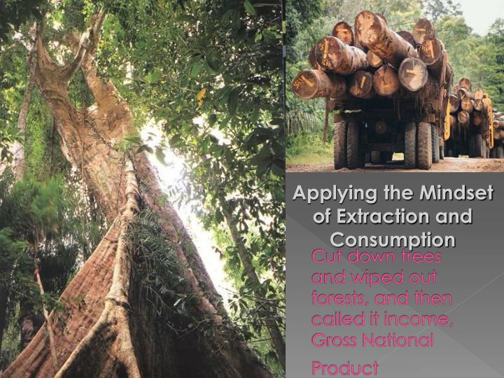 Cut down trees and wiped out forests, and then called it income,  Gross National Product