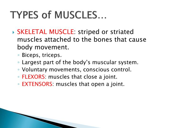 TYPES of MUSCLES…