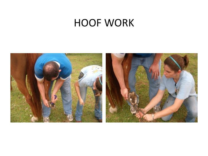 HOOF WORK