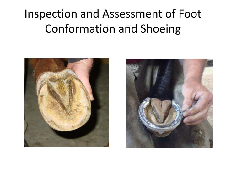 Inspection and Assessment of Foot Conformation and Shoeing