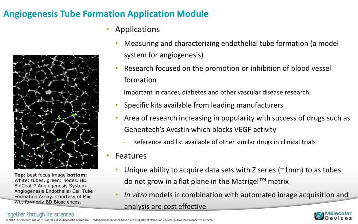 Angiogenesis Tube Formation Application Module